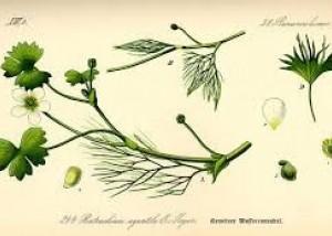 Lucia Ronchetti: Florilegium